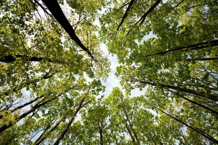 Хорошо ли лесу с нами?
