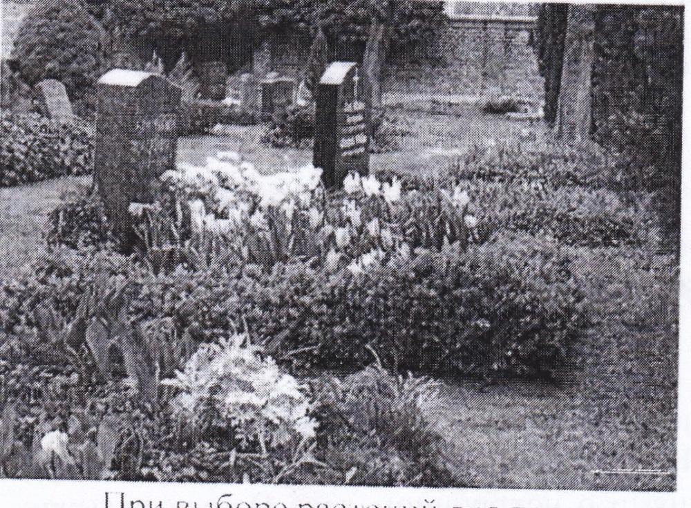Информация о том, что рекомендуется сажать на кладбищах