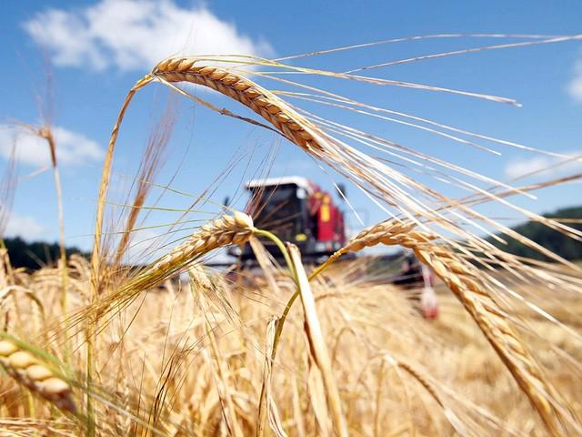 Грантовая поддержка молодых сельскохозяйственных кооперативов