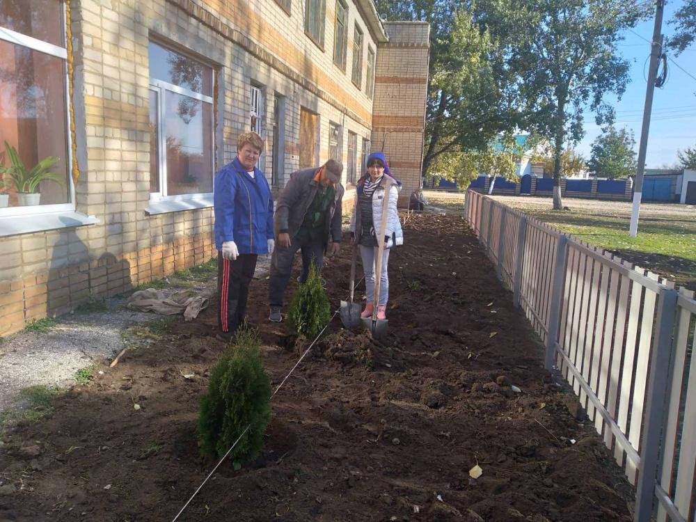 13 октября специалисты администрации сельского поселения Давыдовка посадили 9 саженцев туи колоновидной на территории административного здания в селе Екатериновка