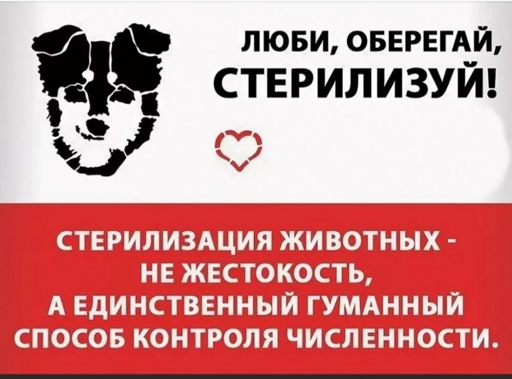 Безенчукская СББЖ проводит акцию по льготной стерилизации непродуктивных животных