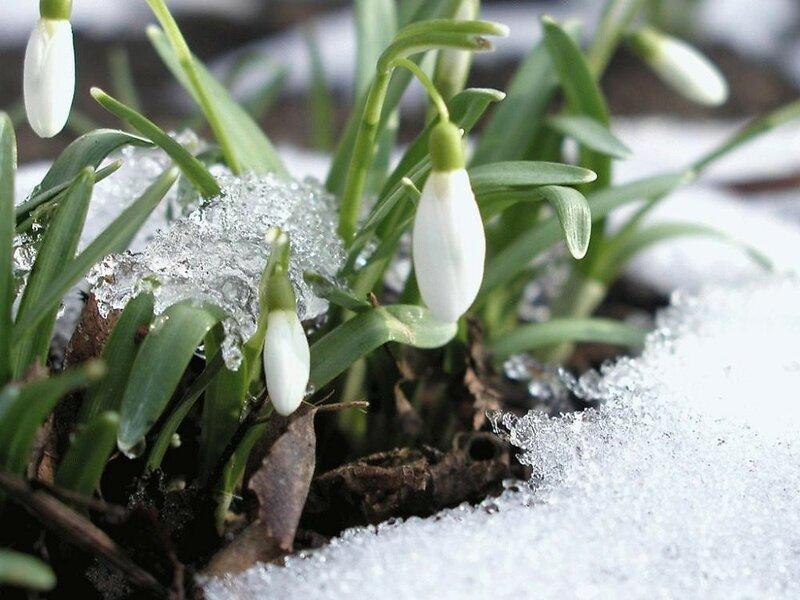 Фотоконкурс «Весна пришла».
