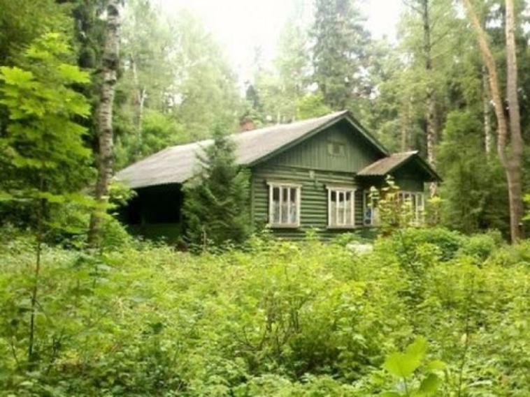 «Прямая» линия по вопросам «лесной амнистии» пройдет 28 февраля