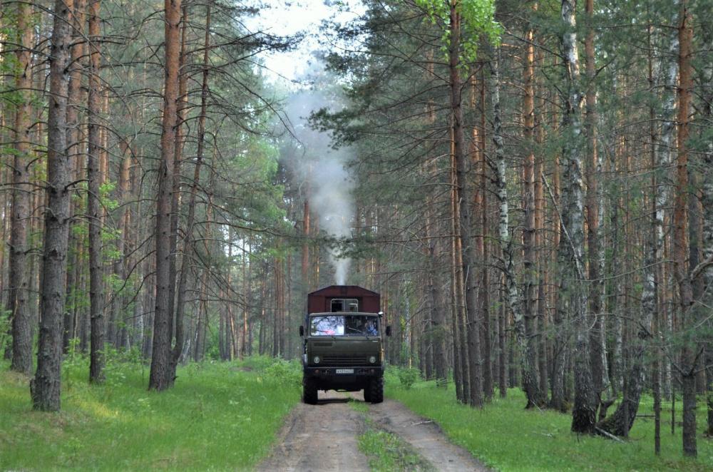 В волгоградском регионе началась обработка лесов от вредителей