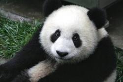 Уголовная ответственность за незаконную добычу особо ценных диких животных, занесенных в Красную книгу