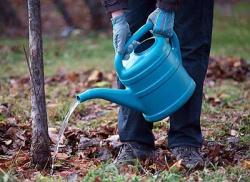 Подзимний полив сада для благополучной зимовки