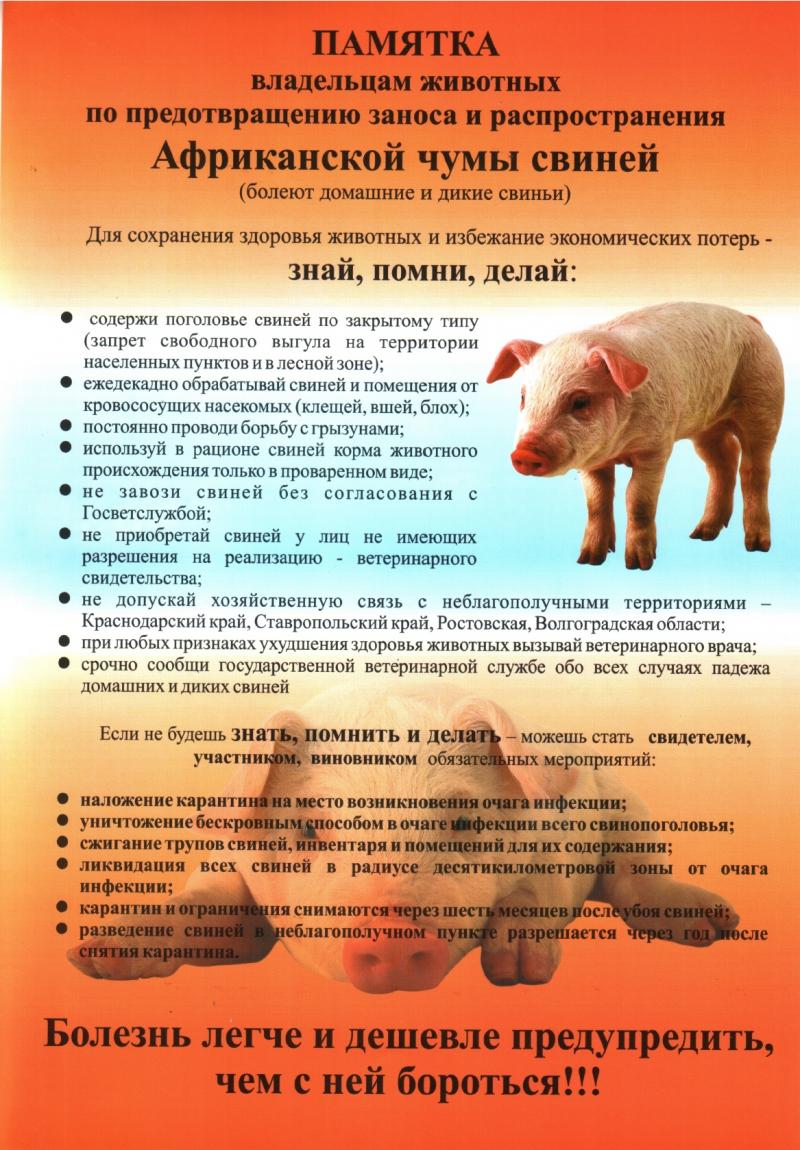 Вниманию граждан Африканская чума свиней