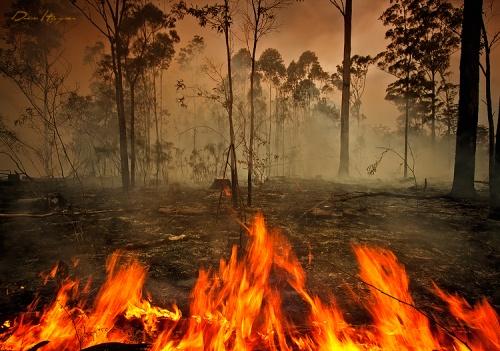 Об ограничении пребывания граждан в лесах