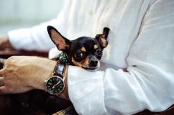 Путешествия с животными: как поехать, где остановиться и какие есть ограничения