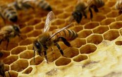 О законе о пчеловодстве