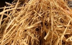 Солома – это и биотопливо, и экологический грунт