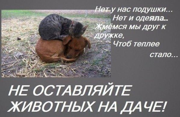 Не бросайте животных на даче!