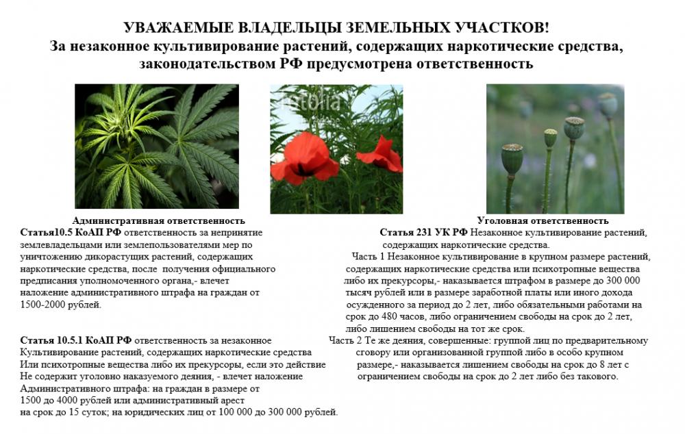 Ответственность за незаконное культивирование растений, содержащих наркотические вещества