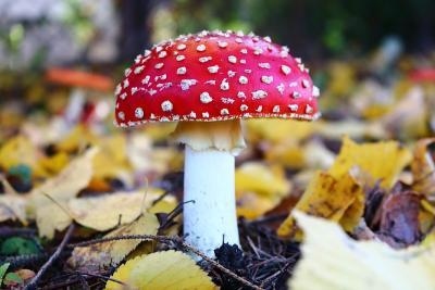 Осторожно: грибы!