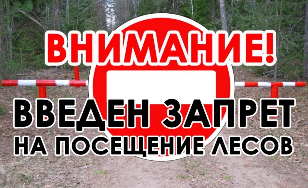 Введен режим ограничения пребывания граждан в лесах