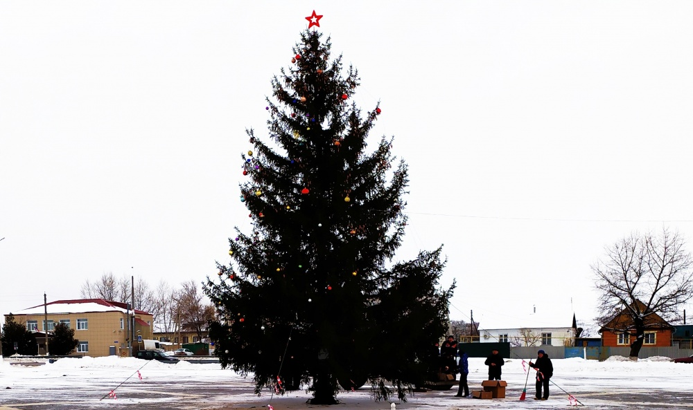 Установили новогоднюю елку