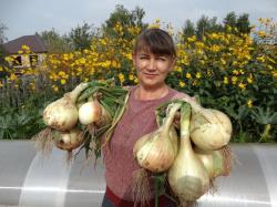 Как вырастить гигантский лук за один сезон