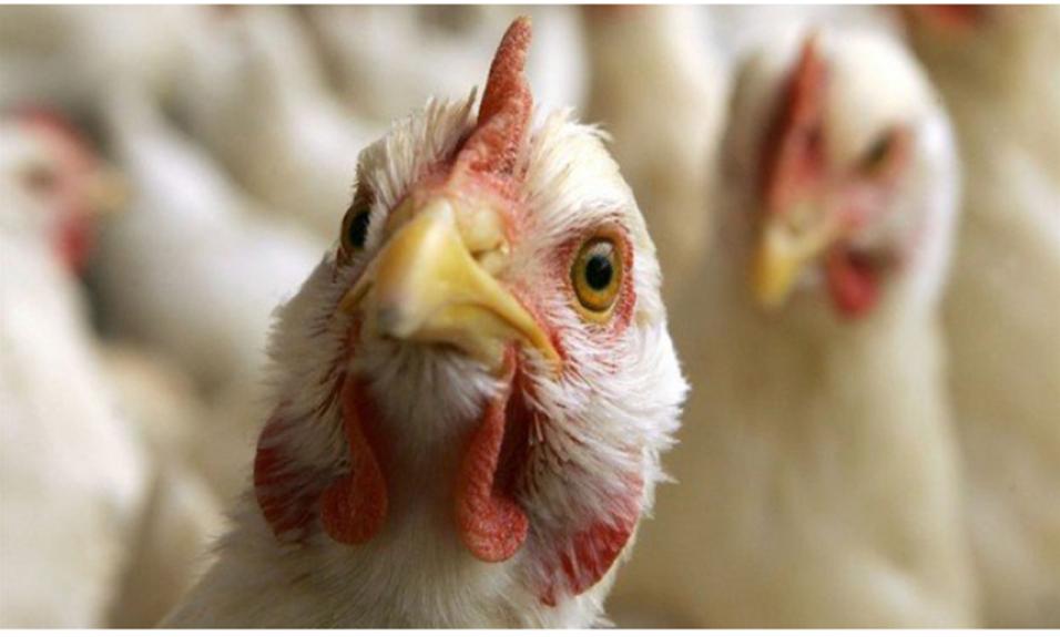 ГБУ КО «Жуковская ветстанция» информирует Вас о продолжающемся распространении возбудителя высокопатогенного гриппа птиц на территории Российской Федерации