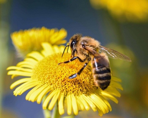 Информация для пчеловодов и жителей!