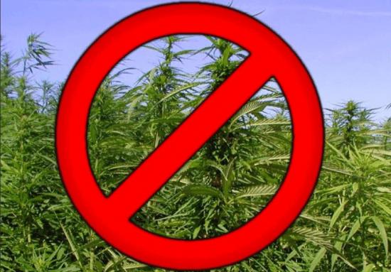 Памятка гражданам по уничтожению наркосодержащих растений