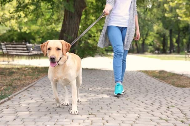 Обращаем ваше внимание на требования к выгулу домашних животных
