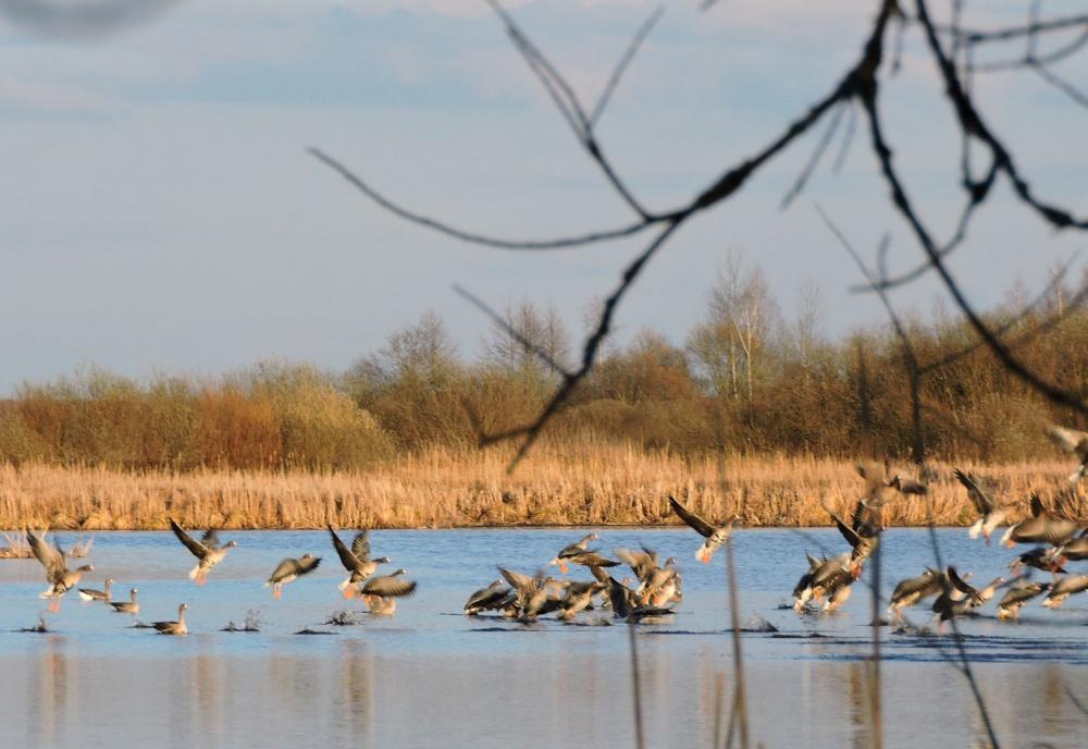 Волгоградская межрайонная природоохранная прокуратура информирует об открытии осенней охоты!