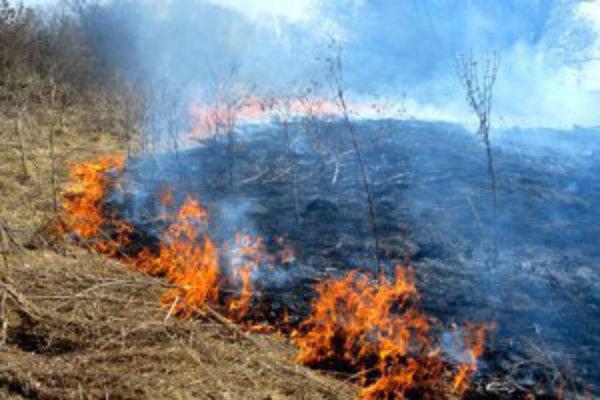 О несоблюдении правил пожарной безопасности в охранных зонах ВЛ