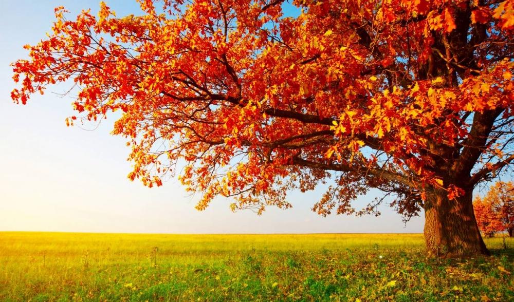 Фото выставка «Что такое «Осень»-это..»