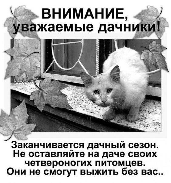 Уважаемые дачники! Не бросайте своих животных!
