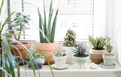 Основные принципы зимовки комнатных растений
