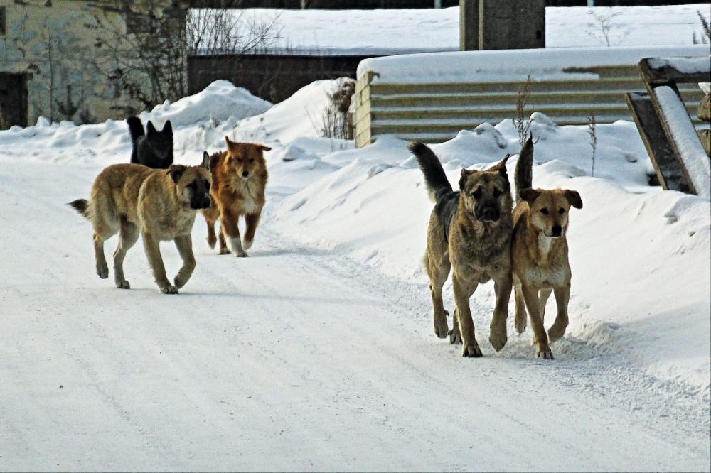 Вниманию владельцев собак!