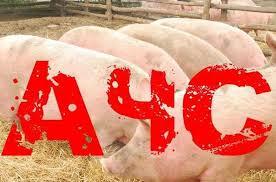 ГБУ СО «СВО»  информирует о выявлении трёх очагов африканской чумы свиней (АЧС) на территории муниципального района Сергиевский Самарской области.