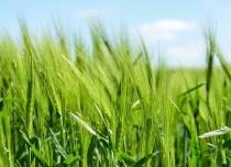 Льготное кредитование сельхозпроизводителей