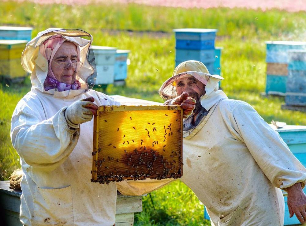 20.07.2021 в 14-00  состоится организационное собрание по вопросу создания общества пчеловодов Хворостянского района.