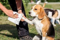 Как защитить лапы собаки на прогулке