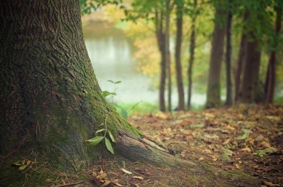 О порядке проведения агролесомелиоративных мероприятий в защитных лесных насаждениях