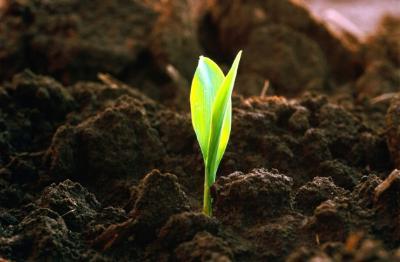 Повышение плодородия почв - залог успешного земледелия