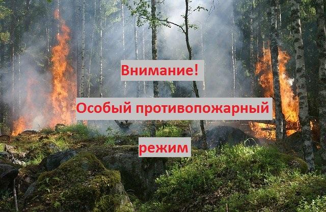 В Воронежской области сохраняется особый противопожарный режим