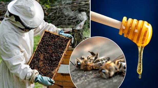 Памятка для сельхозтоваропроизводителей по недопущению протравы пчел  пестицидами и агрохимикатами