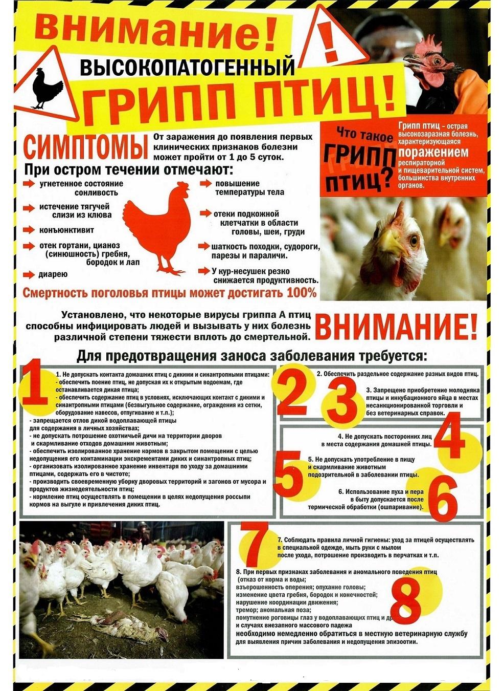 Об обострении ситуации по гриппу птиц