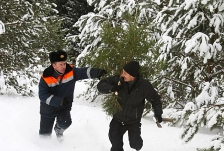 В преддверии новогодних праздников на территории Воронежской области с 15 по 31 декабря 2020 года пройдет областная акция «Операция «Ель».