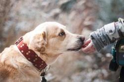 Рекомендации по соблюдению личной гигиены при обращении с домашними животными