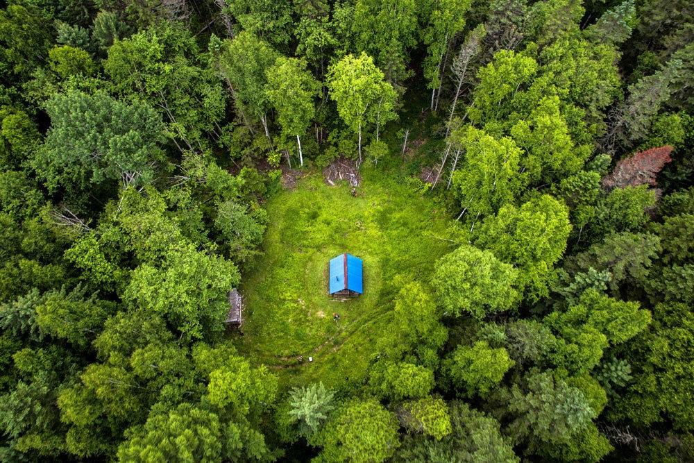 «Горячая» линия по вопросам «Лесной амнистии»