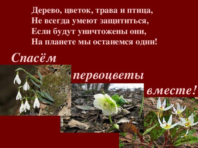 О проведении мероприятия «Первоцветы»
