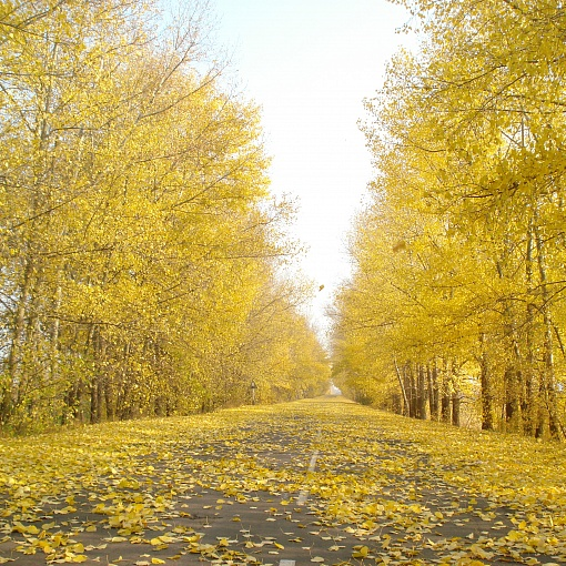 дорога из Колыбелки в Лиски