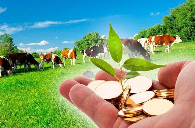 Предоставление субсидиЙ на возмещение части затрат за приобретенное поголовье сельскохозяйственных животных гражданами, ведущими личное подсобное хозяйство, на 2018-2020 годы