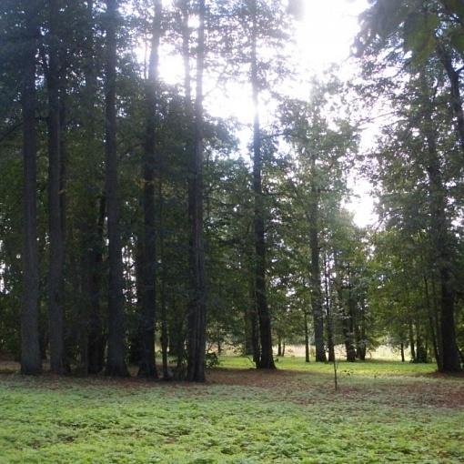 Старинный парк д. Юрово