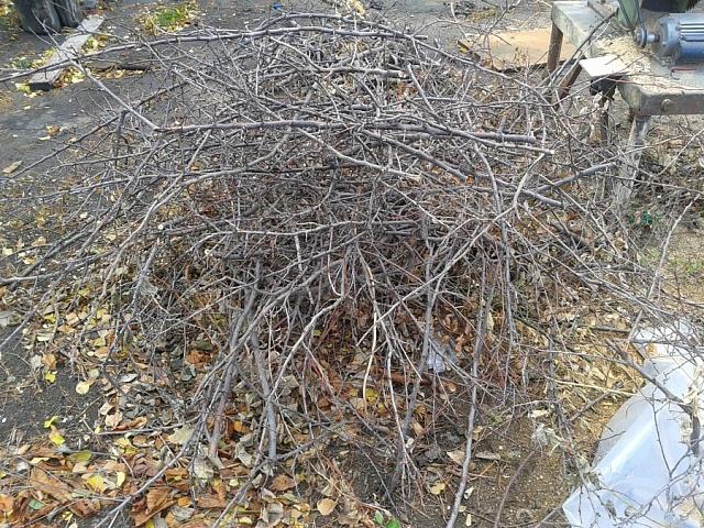 Информация прокуратуры о растительных отходах, образованных при уходе за древесно-кустарниковыми посадками