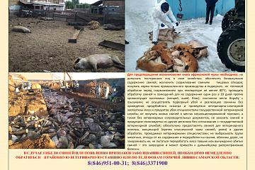 Утверждены новые ветеринарные правила по профилактике и ликвидации африканской чумы свиней
