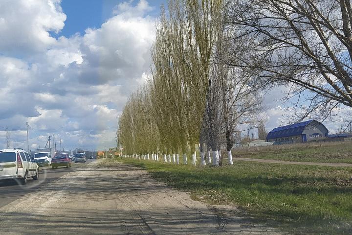 побелены деревья с.Семилуки, ул.Транспортная.jpg